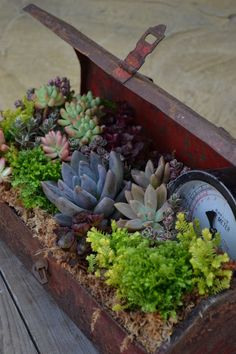 Succulents in old tool box :)