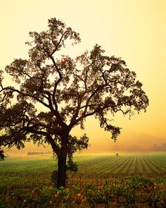 Napa Valley - Wine Country, CA