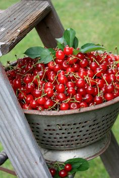 farm, fruit, red, countri life, food, summer, cherries, garden, thing