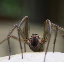 How to get rid of spiders naturally.
