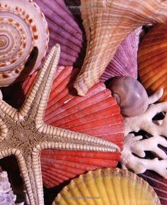 Seashells, Give us More Memories to Cling to Remind Us of Our Sunny Happy Beach Trips  <3