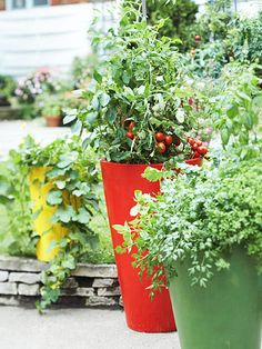 Decorative pots are ideal for growing tomatoes on a patio, balcony, or deck.
