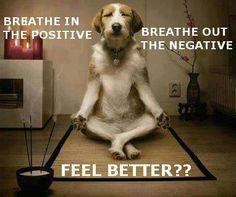 yogahumor, inspiration, dogs, yoga humor, funni, feel better, namaste, meditation, feelings