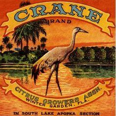 Vintage Florida Citrus