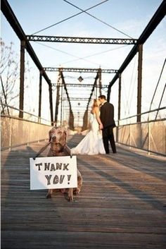 Cute Idea for someone who has a doggie in their wedding.