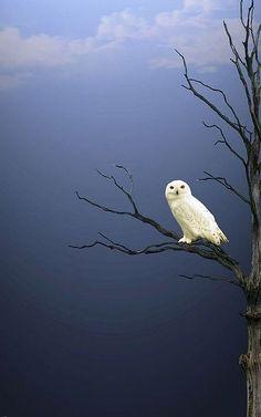 Night #Owl