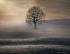 Solitude! beauti landscap, photographyelena shumilova, blue snow, beauti pictur, winter, tree, amaz photographi, natur photographi, blues