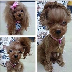 This dog got more style than half the females I know