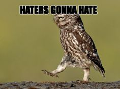 haters gonna hate owl