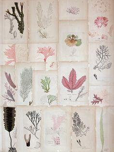 coral botanical prints | #vintage prints #collections