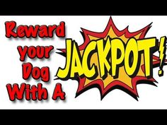Use Jackpots when training your dog...