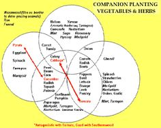 Companion Planting - Vegetable and Herbs