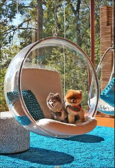 bubble chair - 1968 -Don't know which I like better- Dogs or Chair!