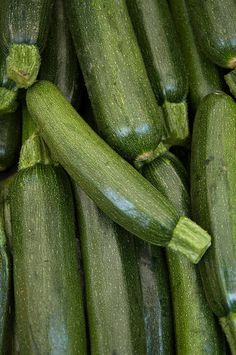 Squash & Zucchini: Planting, Growing and Harvesting