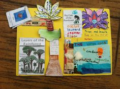 Lapbook rainforest books, lap books, kapok tree, lapbook idea, rainforest project, homeschool habitat, rainforest lapbooks, rain forest, homeschool idea