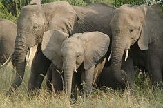 Take Action - Wildlife Conservation Society