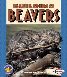 Building Beavers