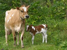 Organic Valley - WE LOVE OUR ANIMALS