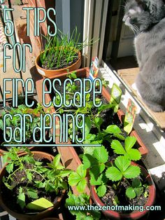 5 Tips for Successful Fire Escape and Container Gardening #gardening #containergardening #tips #plants
