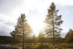 Scandinavian Landscapes by Peter Boel, via Behance