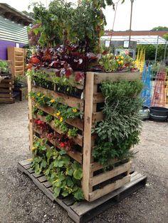 Freight Pallet garden