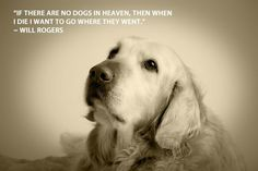 dog lovers quotes - Bing Images