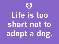 Life is too short not to adopt a dog.  Petfinder