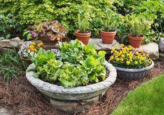 fall vegetable / herb garden in pots