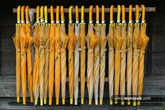 .yellow umbrellas