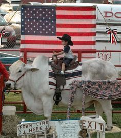 ... Having His Photo Taken on a Brahma Bull Bandit at the Cowtown Rodeo