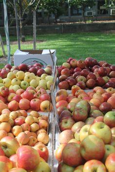 farmers market at the NY Botanical Garden, Bronx, NY