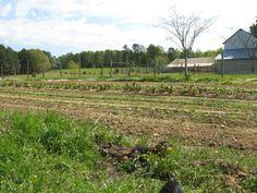 The fields in March.