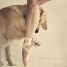 #dog #ballerina