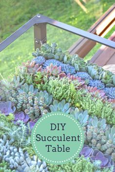 Grow a Living Succulent Table --> http://www.hgtvgardens.com/decorating/make-a-living-succulent-table?soc=pinterest backyard, garden