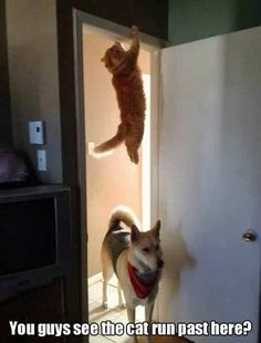 """You guys see the cat run past here?"" ~ Dog"