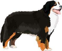 Man's best friends Vectors - Lassie @freebievectors