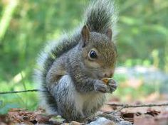 For My Hubby's Garage:  Squirrel Repellent ~ 1 capful Murphy's Oil Soap  1 Tbsp hot sauce  1/4 teaspoon cayenne pepper    Combine items in a 22 oz spray bottle, then fill with water. Shake to combine well.Spray wherever squirrels are not wanted.