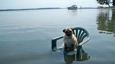water, dog pics, anim, funny dogs, chairs, funni, lake, pugs, boat