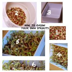 How to Grow Sprouts from Home