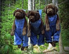 These sweet puppies will seek sweet revenge for this photo by way of chewing many things. But it sure is cute. :-)