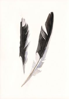 Watercolor feathers by Louise DeMasi.