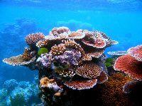 reef safe fish mediaction
