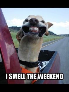 I SMELL THE WEEKEND...