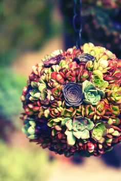 A living succulent topiary ball