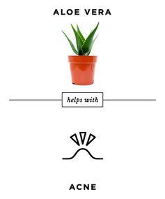 Face-Plant Into Aloe Vera