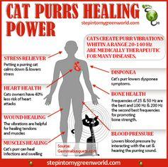 Cat purrs healing power