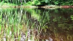 La rivière paisible, les joncs patients....