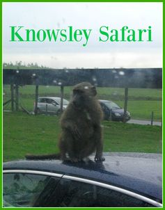 Read our review of our trip to Knowsley Safari during October half-term. A must-do for fans of car-surfing baboons.