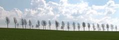 Des arbres alignés, une ligne épurée, la fin de l'été...