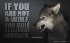 If you are not a wolf  Wolf Quotes About Strength